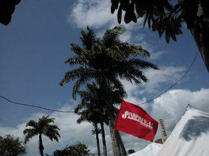 palmeira16